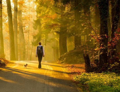 Waarom is wandelen gezond…